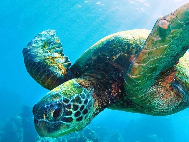SeaTurtle-1600x600px