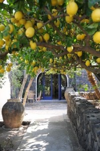 lemon entry