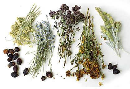 uscarea-plantelor-medicinale