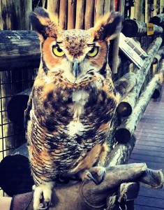 owl wisdom